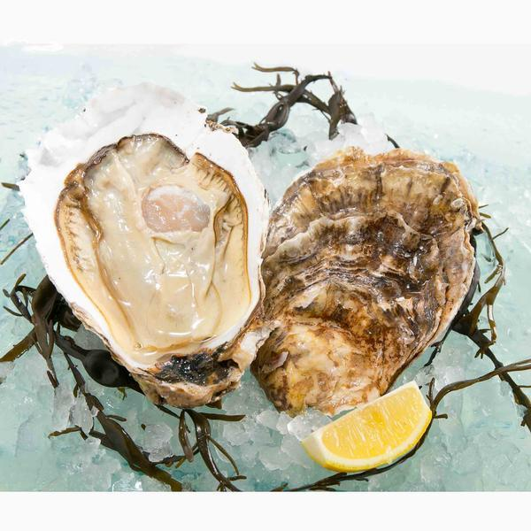 USA Pacific Oyster - Jumbo  (1pc)