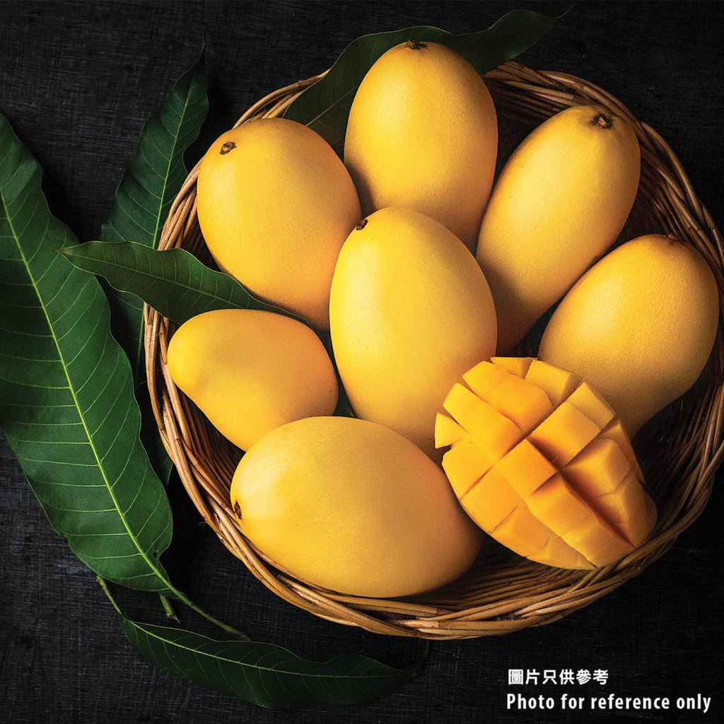 Taiwanese Summer Snow Mango - Case