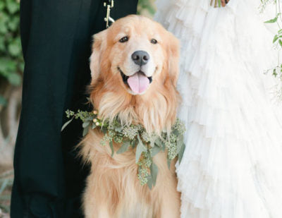 Bride's Best Friend - Cutest Ways Include your Dog in your Wedding