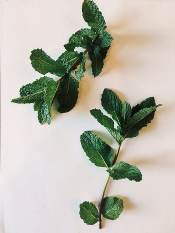 mint wedding herbs symbolism