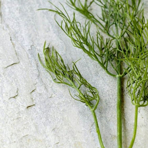 dill wedding herbs symbolism