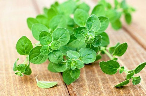 oregano wedding herbs symbolism