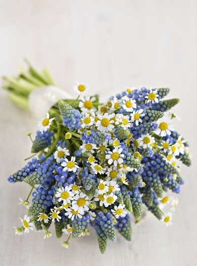 muscari wedding flowers