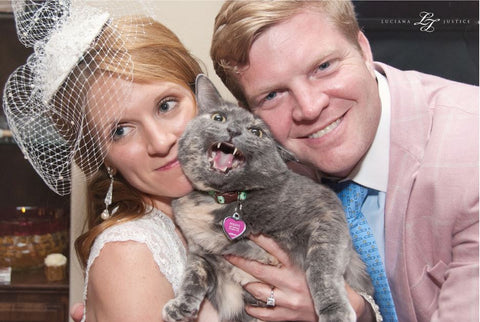 cat at wedding
