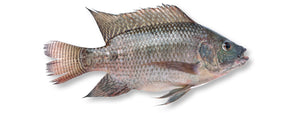 Whole Tilapia 10kg Ctn