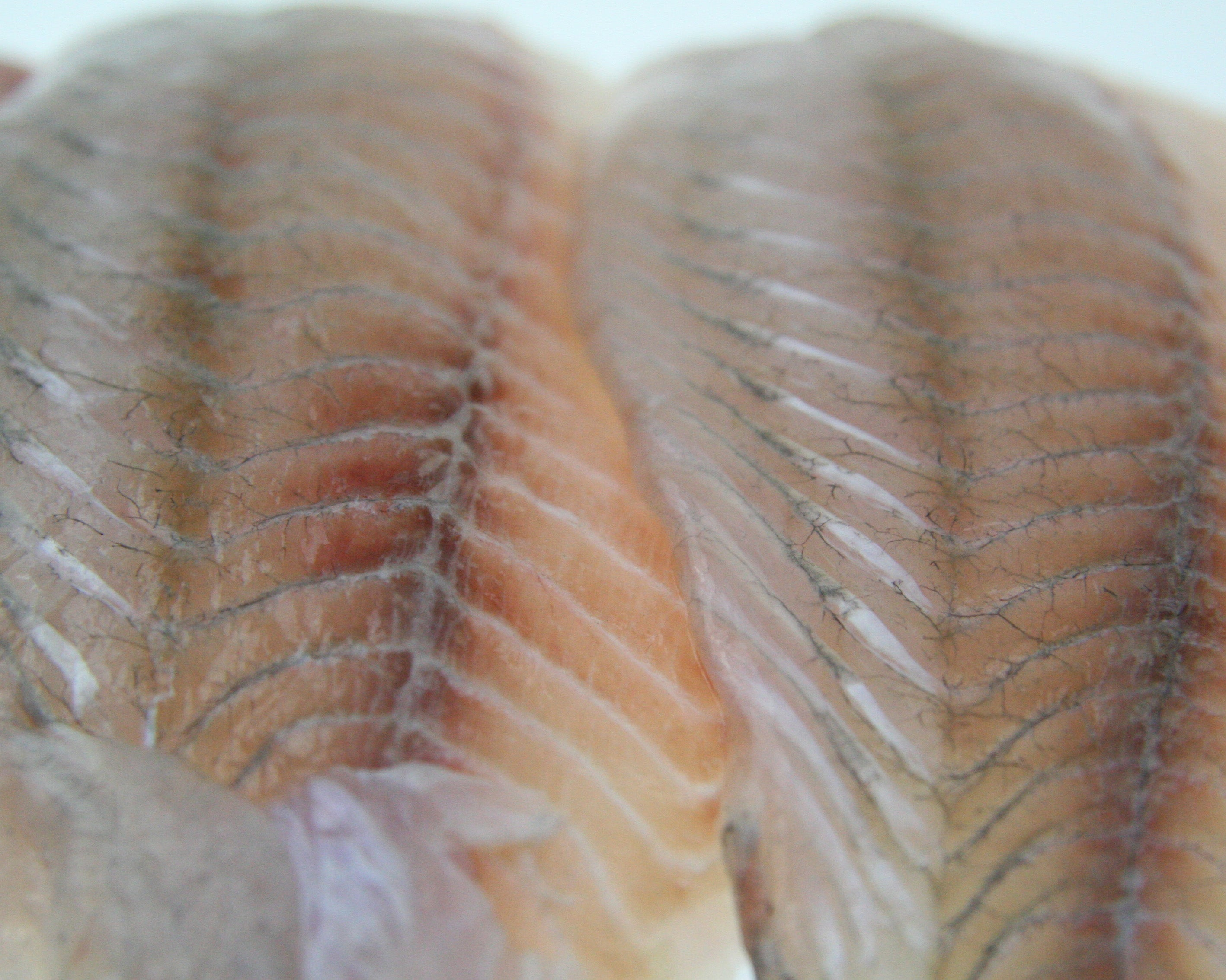 Barramundi Fillets Skinless 5kg Ctn