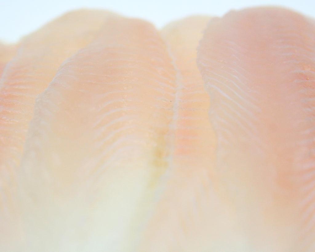 Basa Fillets Skinless 5kg Ctn