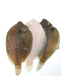 Whole NZ Sole 10kg Ctn
