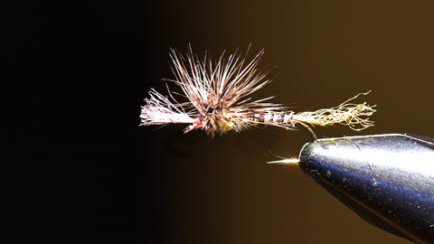 Callibaetis: How to Fish the Various Stages of the Mayfly Hatch
