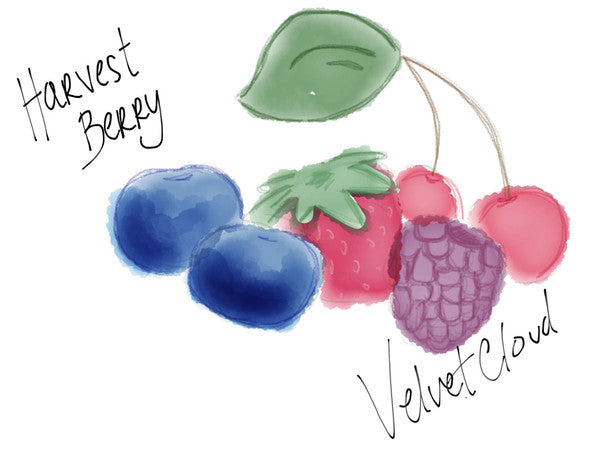 Velvet Cloud - Harvest Berry