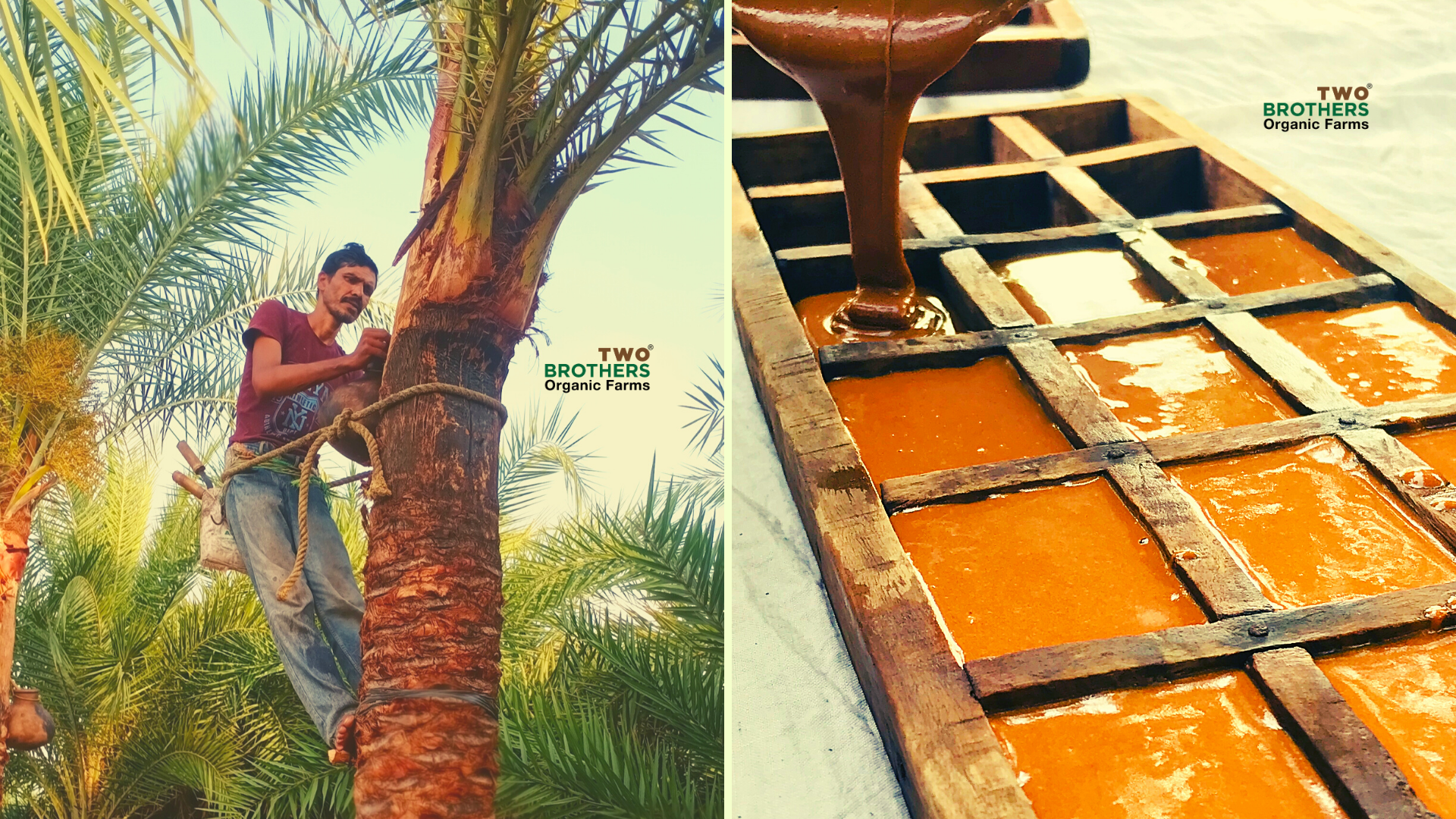 Date Palm Jaggery - Farmer Musings of the Native 'Mishti'!