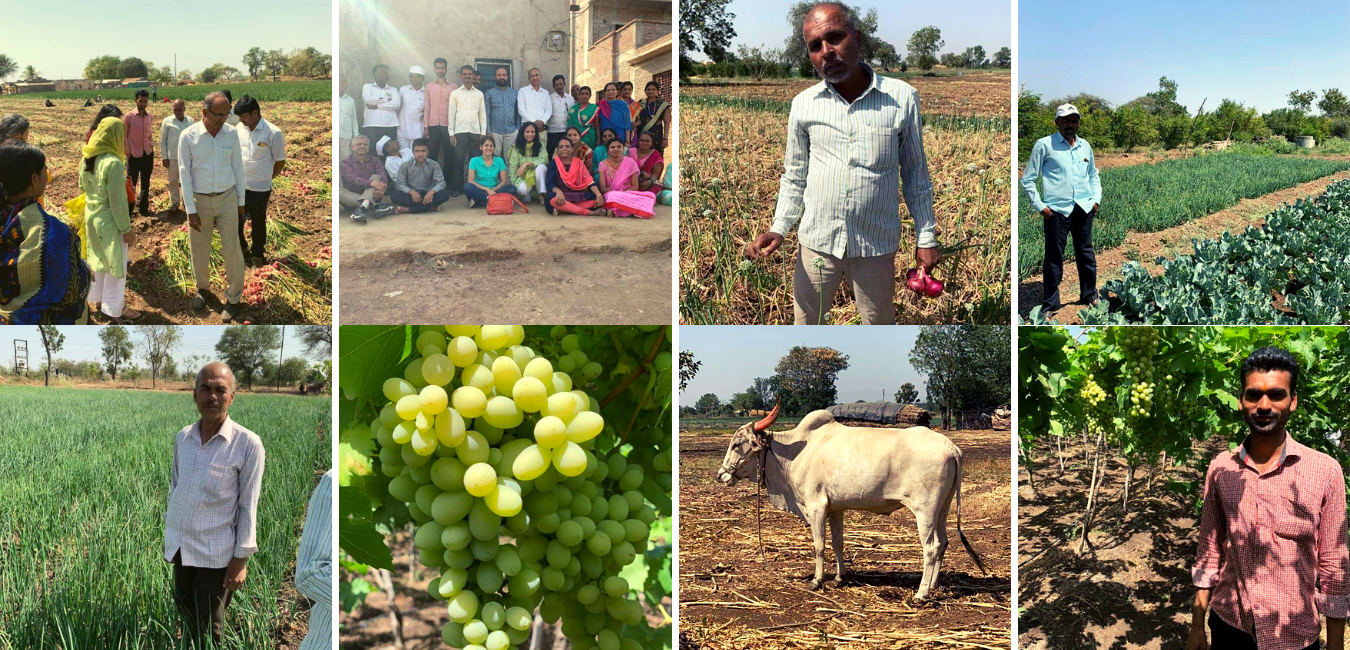 Organic Farmers of Maharashtra, Chemical free farming, Natural Farming, OrganicWe, Two Brothers Organic Farm, TBOF, India
