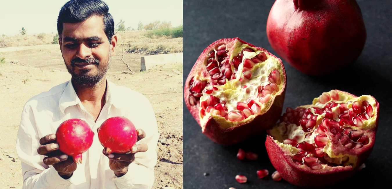 Namdeo, Organic Farmer, Organic Pomegranates, Organic fruits, Organic farmers of Maharashtra, Two Brothers Organic Farms, TBOF, India
