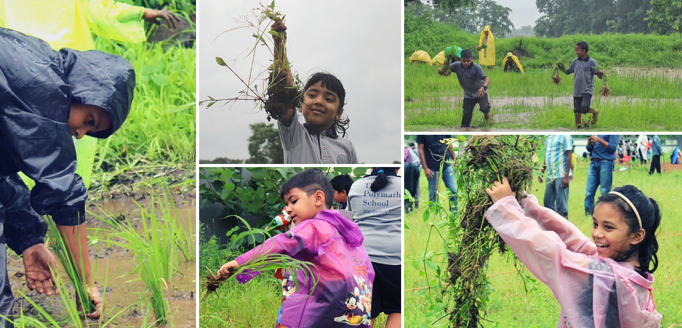 Organic Farming at Schools, Organic Food Forest at Schools, Bishops School Organic Food Forest, Farming at Schools india, Two Brothers organic Farms, TBOF, The Polymath School