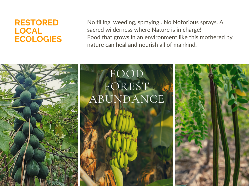 Food forest, regenerative agriculture, forest, environment, agriculture department, organic farming, environmental health, food forest, soil health, tropical evergreen food forest, our environment, evergreen forest, environmental education,