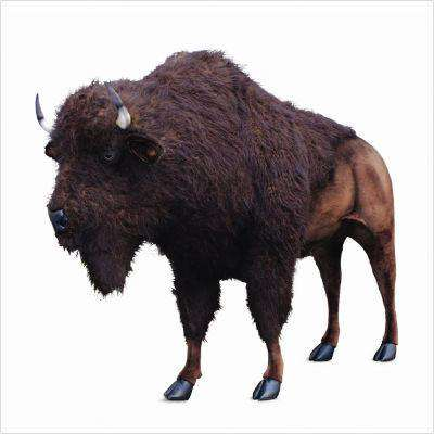 "Buffalo / Bison - Lifesize 96"" x 72"""