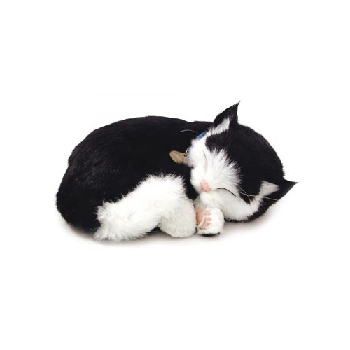 Perfect Petzzz Black & White Shorthair Kitten