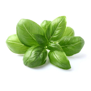 The Healing Benefits of Basil