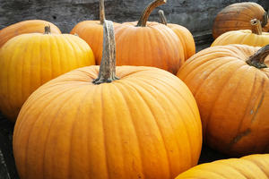 The Healing Benefits of Pumpkin