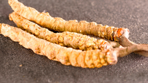 Cordyceps Sinensis Perfect Supplements Australia