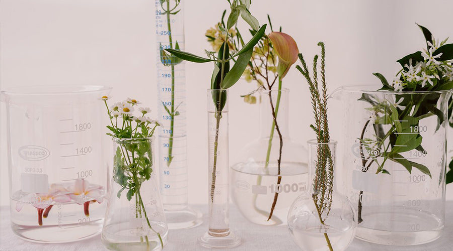 plants in beakers and test tubes