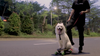 Leafboard Plus- Just So Stable Even If Riding With Your Dog!