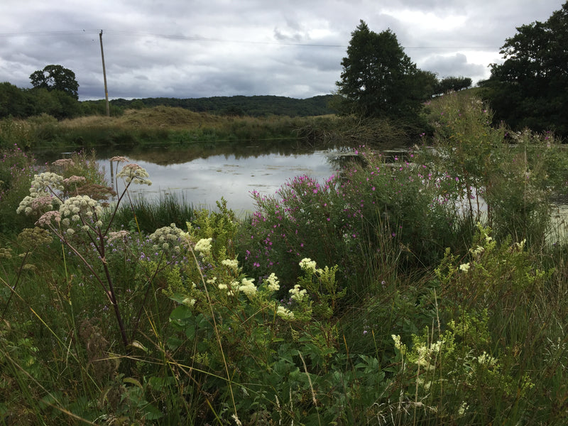 The Ponds of Treflach