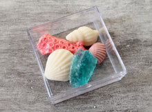 Beach Finds Sea Shells Box - 6 Clear boxes with 6 PCS