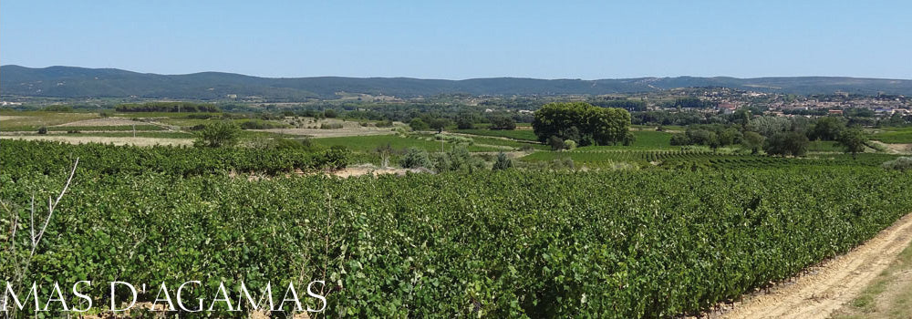 Vincent Visseq and the Mas d'Agamas vineyard