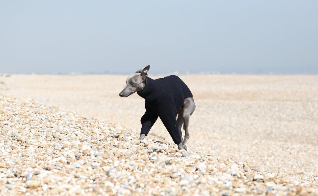 Dungeness, Occam London, Occam Dogs