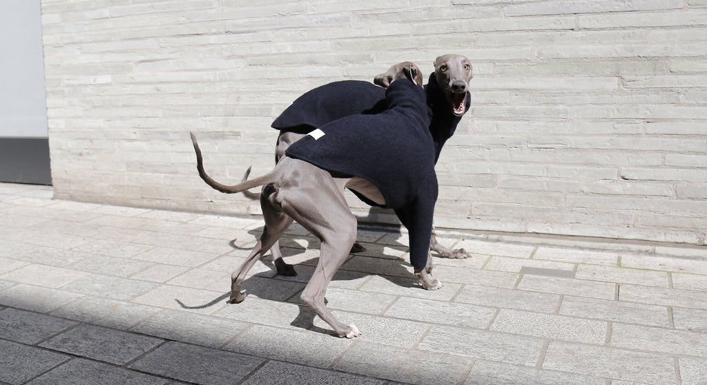 Occam London - Whippet and Italian Greyhound coats