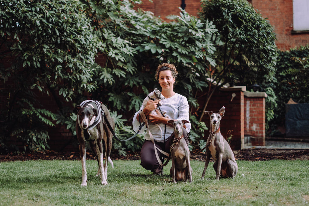 Expert Behaviourist in Whippets, Lurchers and Greyhounds