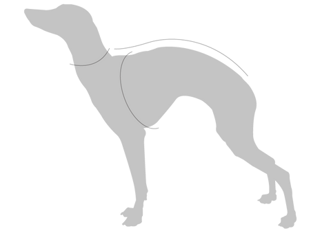 Whippet Measurements