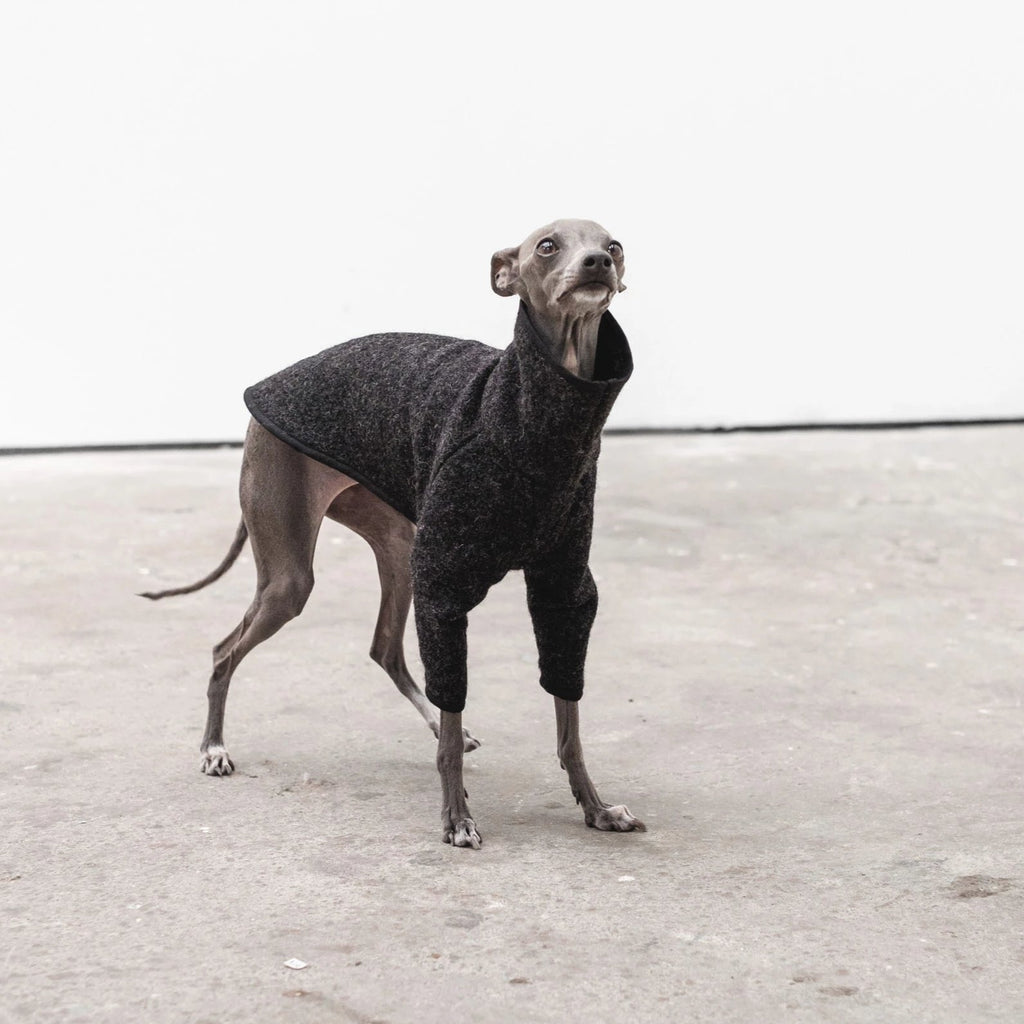 Italian Greyhound Coat in graphite