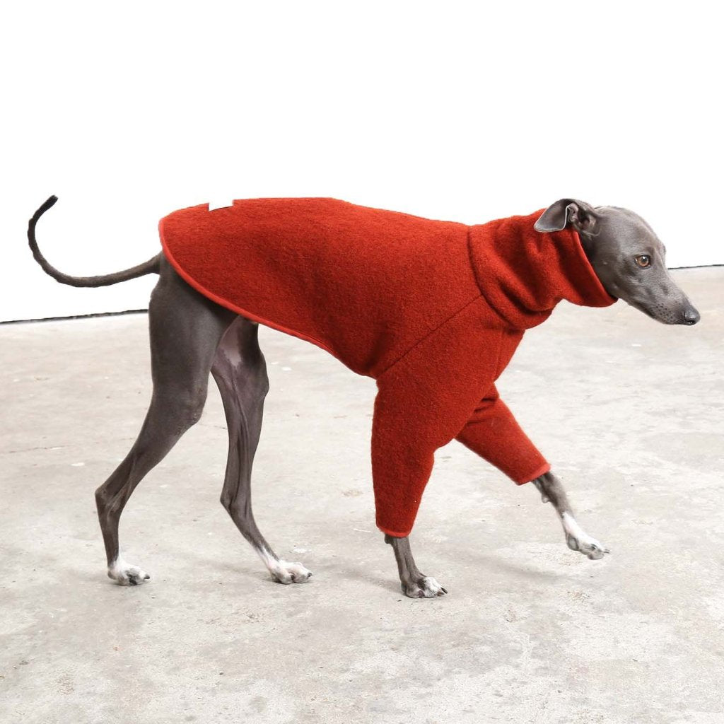 This is a designer Whippet Coat made by Occam London. This is a Jumper for Italian Greyhounds and Whippets.