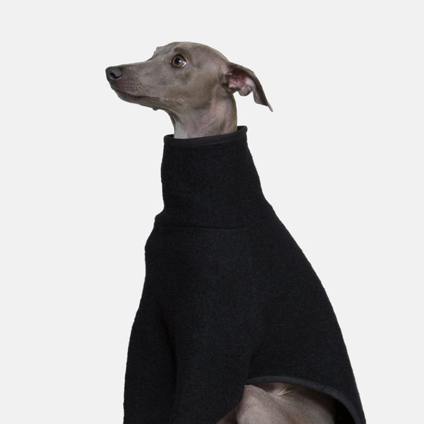 Italian Greyhound Coat in Black