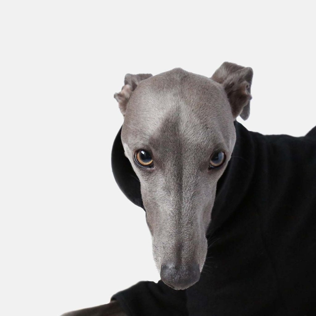 This is a designer Whippet Coat made by Occam London