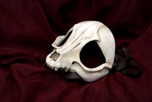 Handmade Resin Skull Mask - Fox Skull