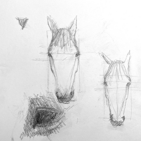 Drawing the proportions of the horse's head from life.