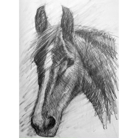 Expressive linear and tonal drawing of a horse head.