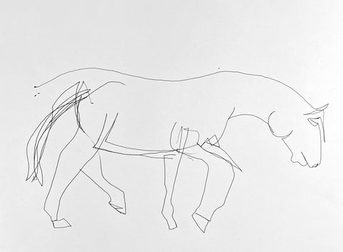 Blind contour drawing of a horse.