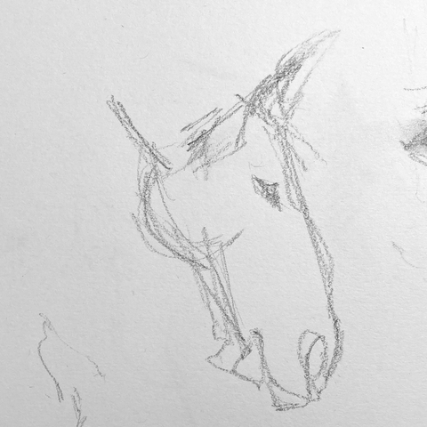 Drawing horses from life.