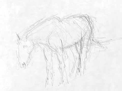 Pencil drawing of a horse standing.