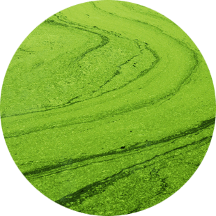 Algae Extract image