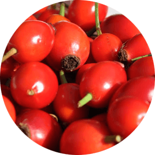 Rose Hip Seed Oil image