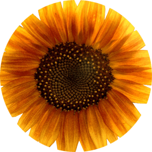 Sunflower Oil image