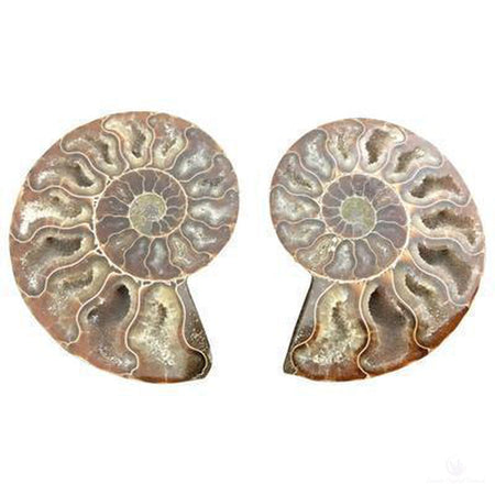 Ammonite Pair-Crystals-Cosmic Crystal Visions-Cosmic Crystal Visions