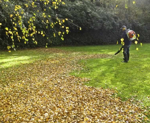 Leaf and Pine Straw Removal - Residential