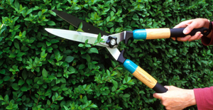 Hedge & Shrub Pruning - Residential