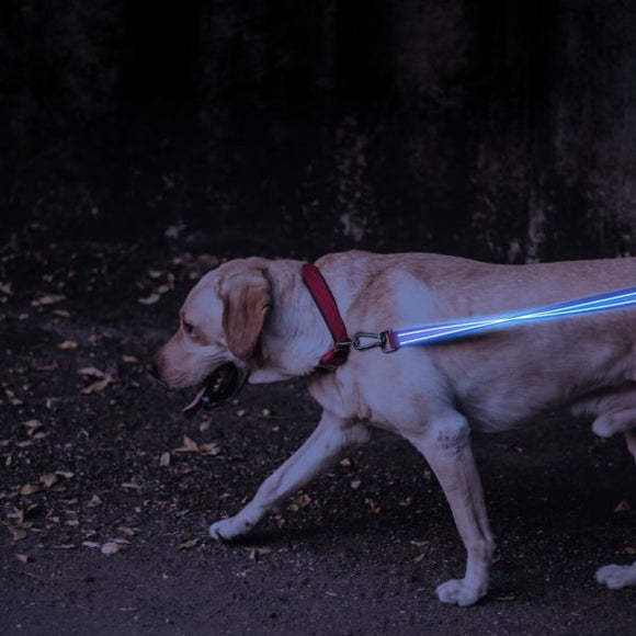 LED LITE UP DOG LEASH